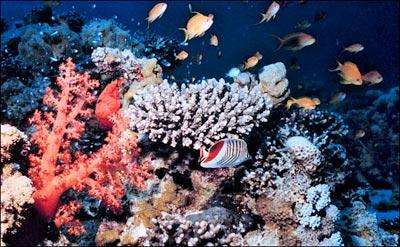Kem chống nắng đe dọa san hô